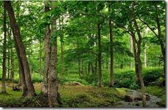 Millenial Forest